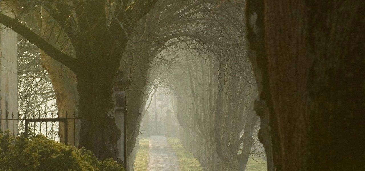Trees Chateau Guiraud