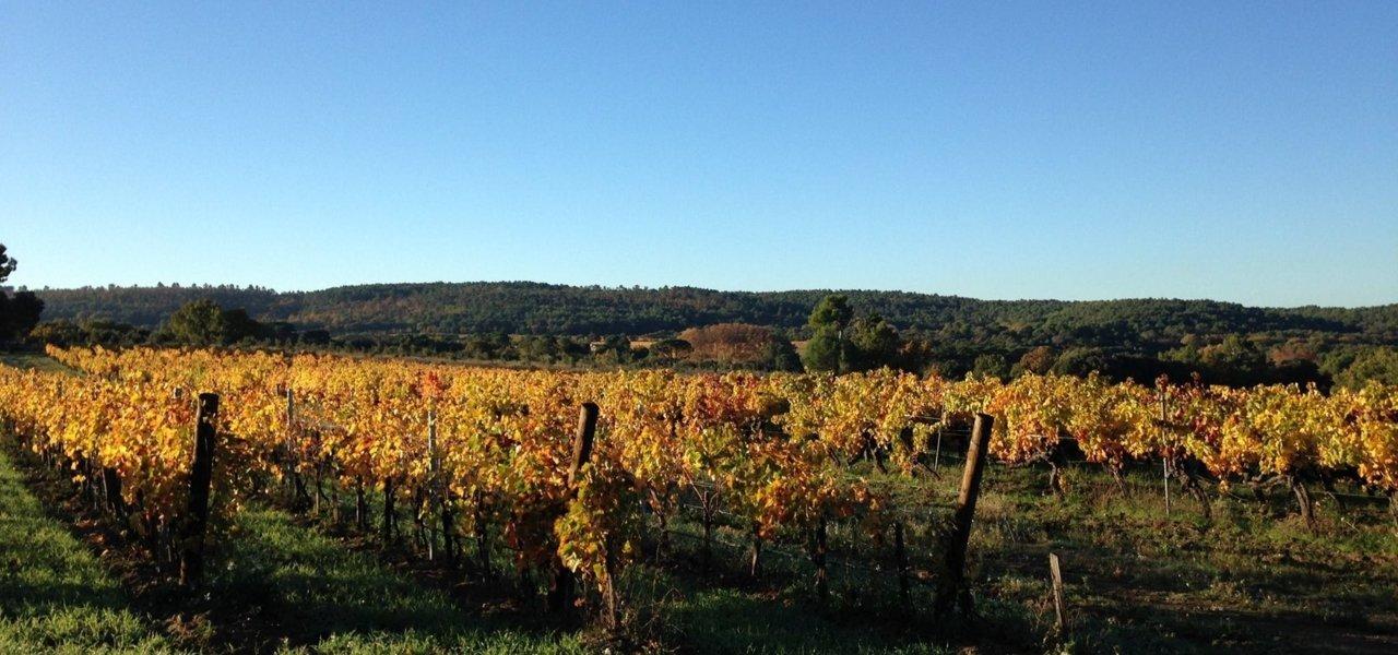 vineyard villa baulieu