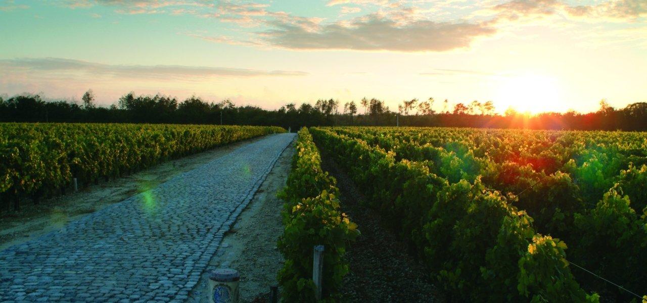 Sunset over du Tertre's vineyard.