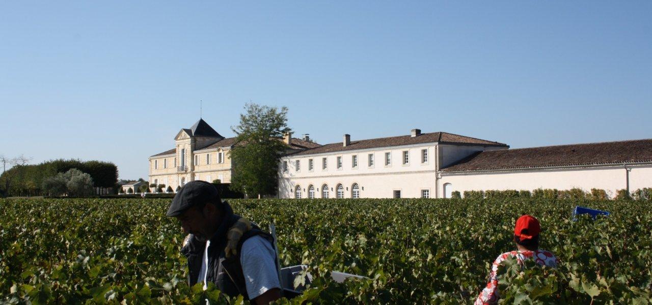 Harvest at chateau du Tertre.