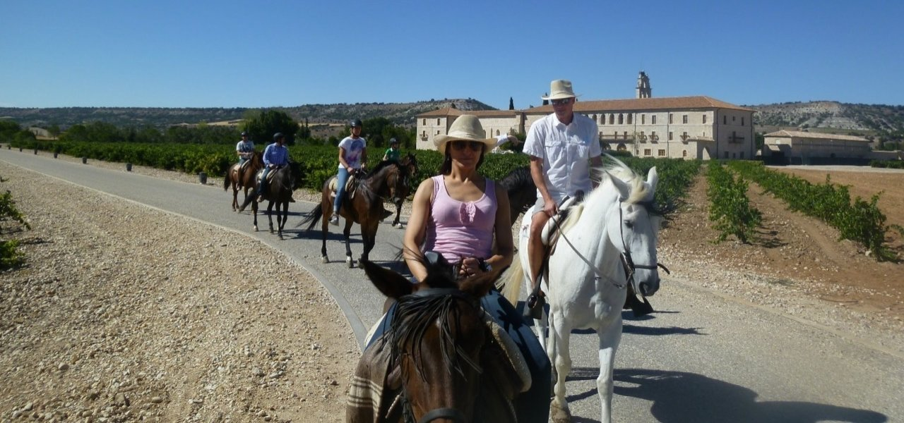 Horse Ride Around Vineyards