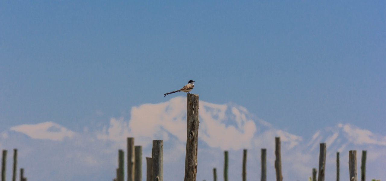 Alpasion Vineyard Bird and Snowy Andes Mountains