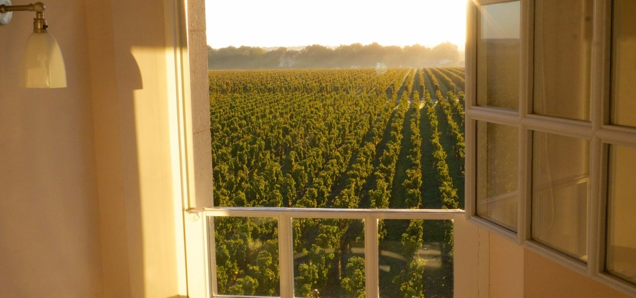 View over the vineyard from one of our guestrooms.
