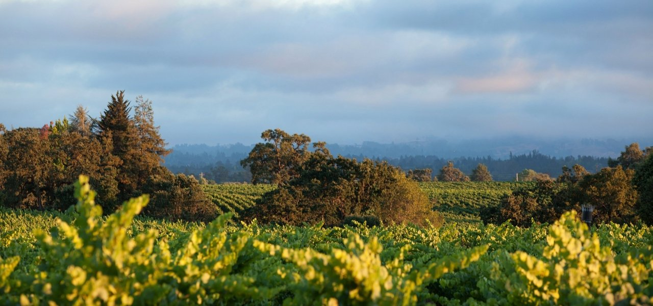 DeLoach Vineyards and the Russian River Valley