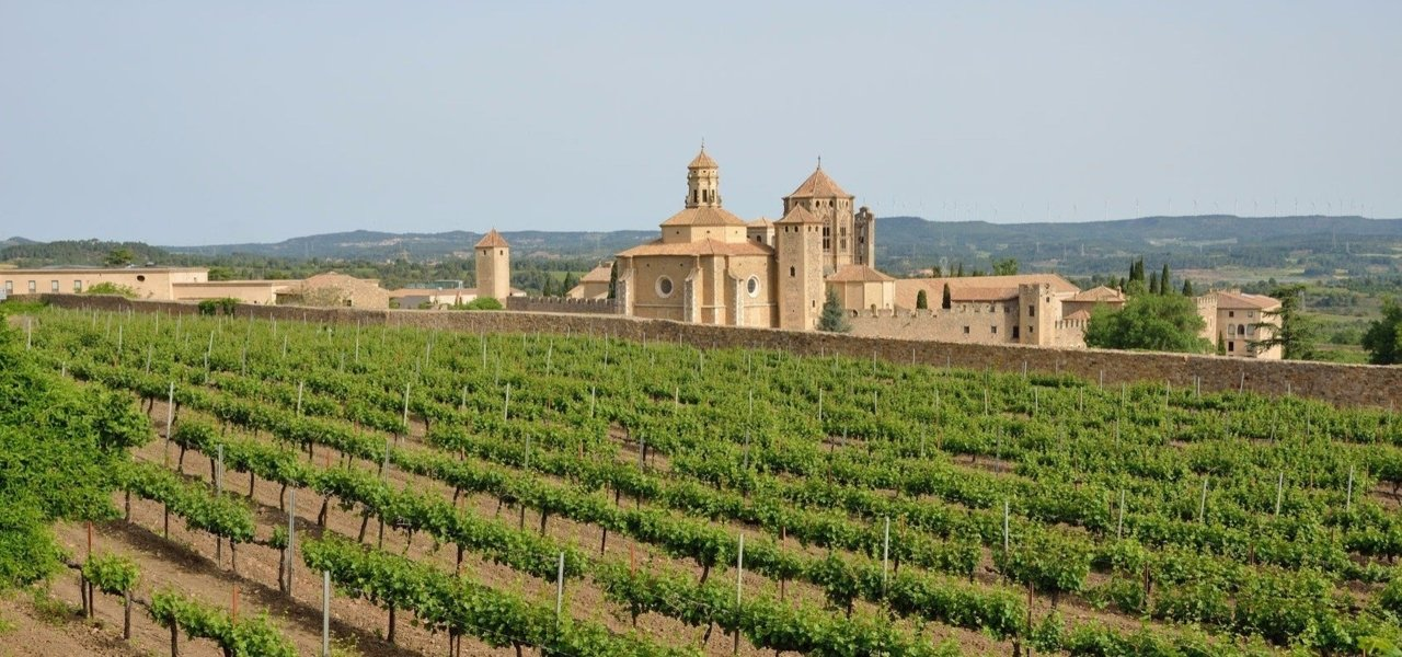Poblet Cister Monastery SXII, among vineyards next to Priorat region
