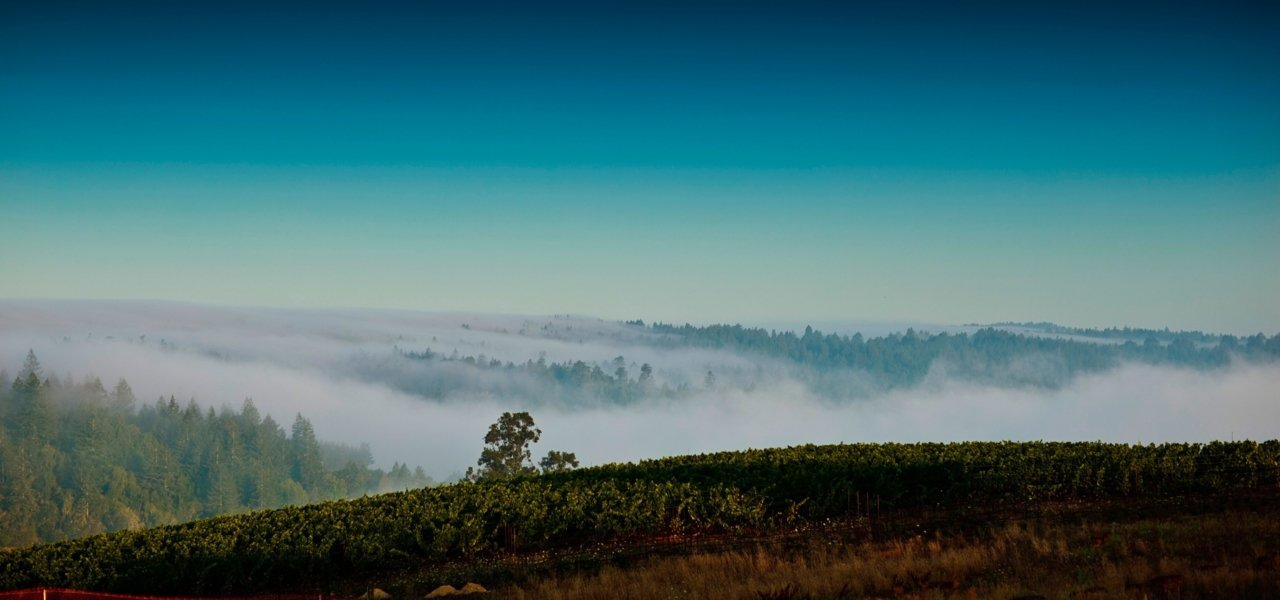 The rolling hills and fog line at the Sonoma Coast Vineyards - The Pivot by Littorai Vineyards