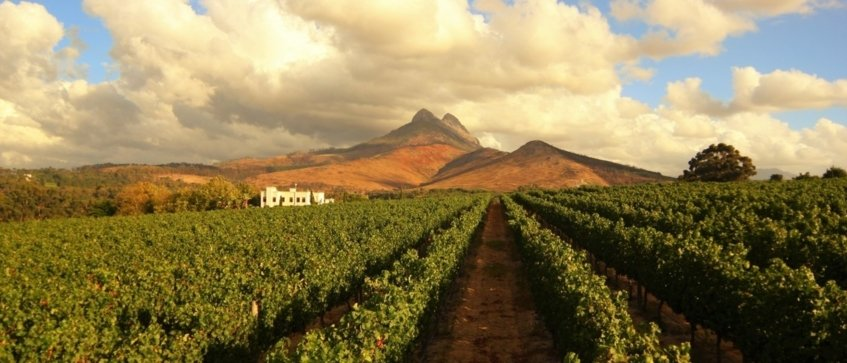 wine tours stellenbosch - Wine Paths