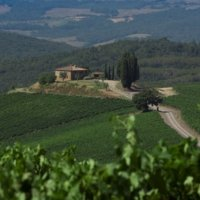 Castiglion del Bosco vineyards - Wine Paths