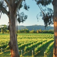 visit Cloudy Bay Vineyards