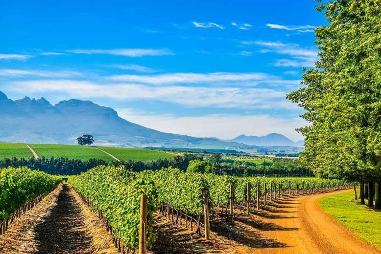 best wine tours in south africa - wine Paths