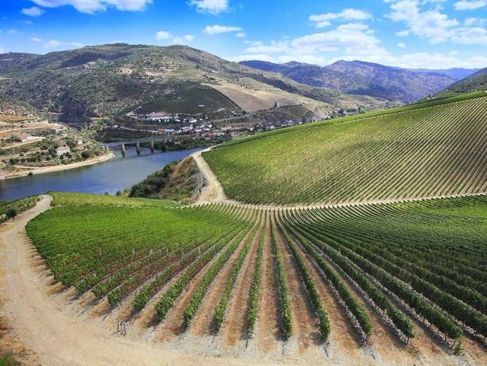 best wine tours in douro valley - Wine Paths